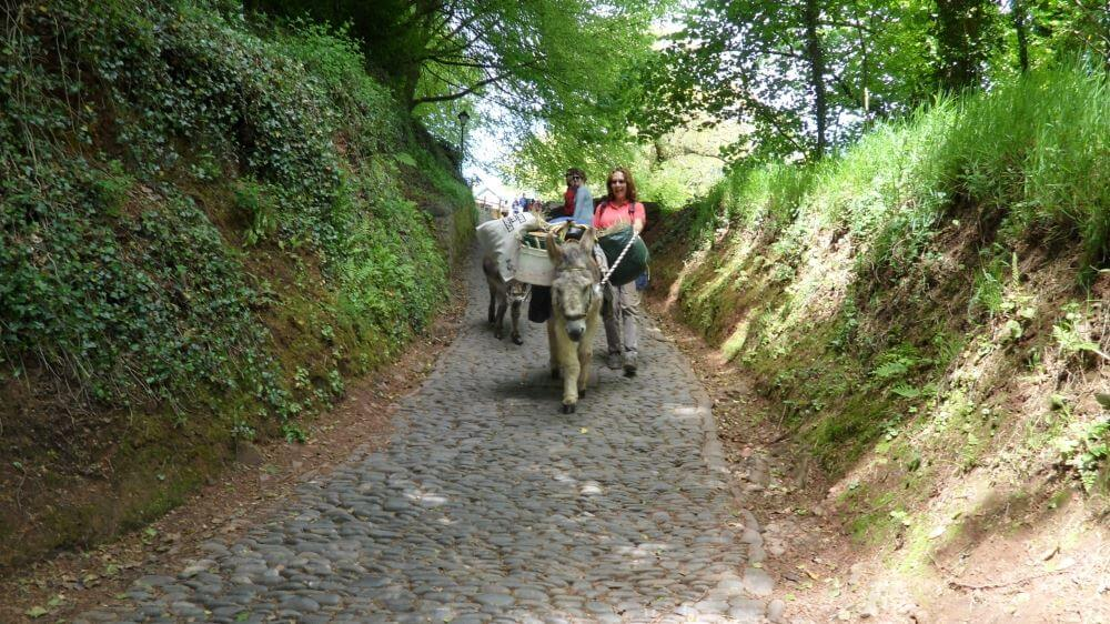 Clovelly Donkeys and Mules at our little village in Devon where everything goes down the hill on sledges and up the hill on Donkeys